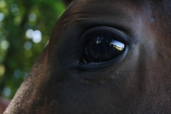 Pferdebilder gesucht - (Pferde, Name, Namen)
