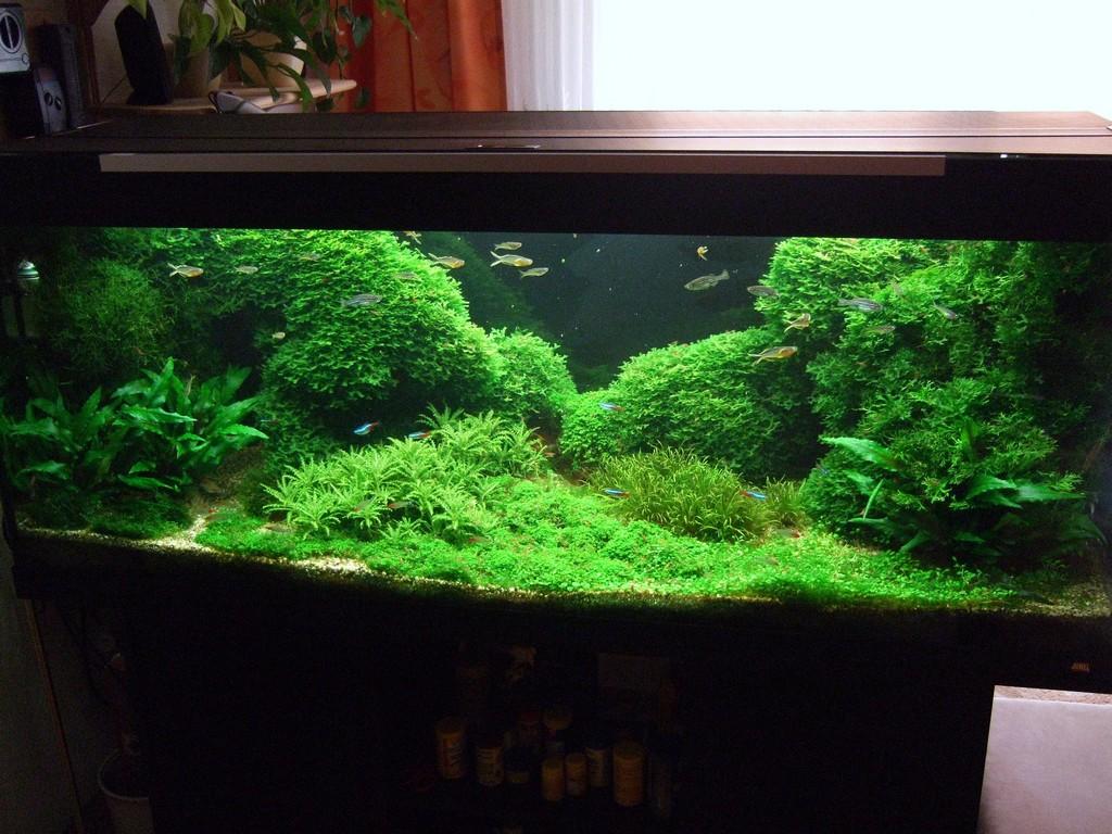 sch nes gr nes und bewachsenes aquarium wepches moos. Black Bedroom Furniture Sets. Home Design Ideas