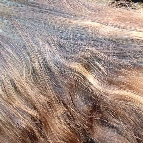 Übergang vom Ansatz  - (Haare, Frisur, Haarfarbe)