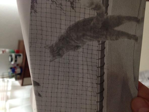 schutznetz - (Katzen, Kater, Balkon)