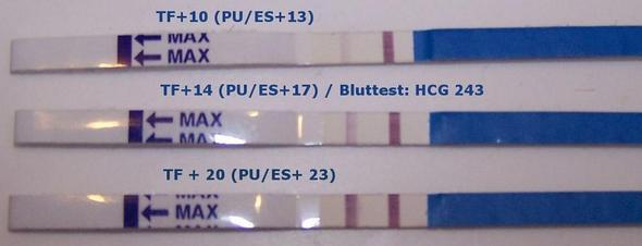 Sind nicht meine Tests - (Schwangerschaft, Periode, schwanger)