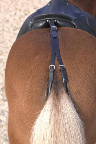 Schweifriemen - (Pferde, Pony, Schweifriemen)