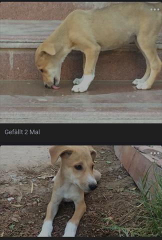- (Tiere, Hund, Haustiere)