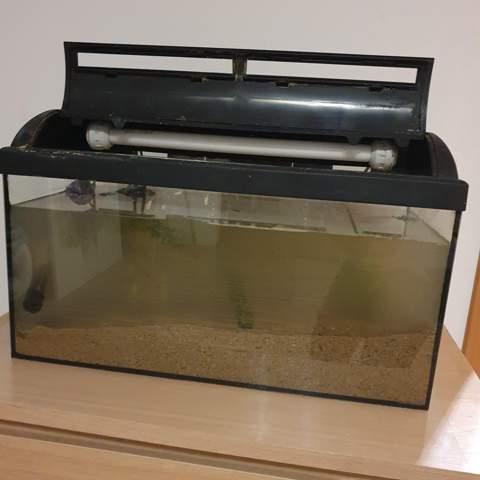 Sehr Wichtig: Fische im Becken lassen oder ins trübe AQ?