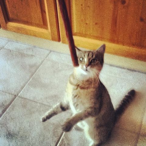 Meine Katze<3 :* - (Katze, Schluckauf)