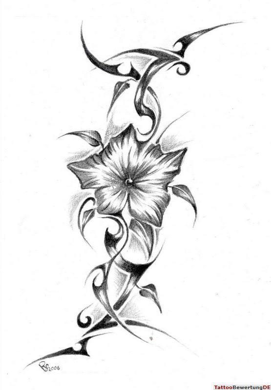 Bleistiftzeichnungen Blumen Ranken