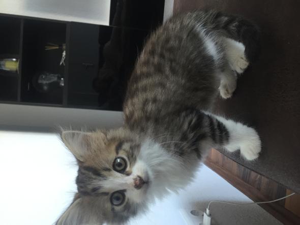 Das ist die kleine  - (Katze, Katzen, babykatze)