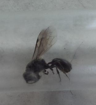 Holz-fressende Fliege - Bild 1 - (fliegen, Insekten, Holz)