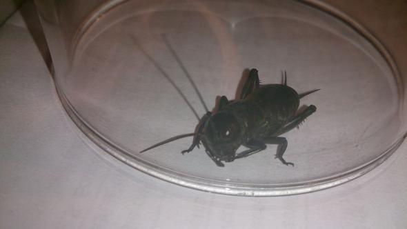 käfer1 - (Kaefer, Käferart)