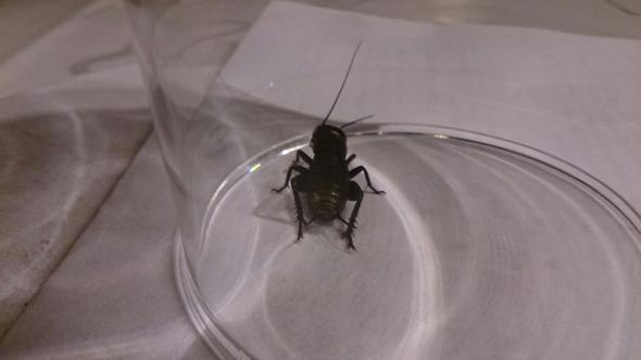 käfer2 - (Kaefer, Käferart)