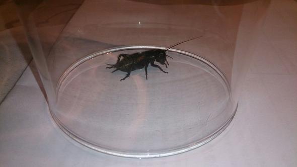 käfer5 - (Kaefer, Käferart)