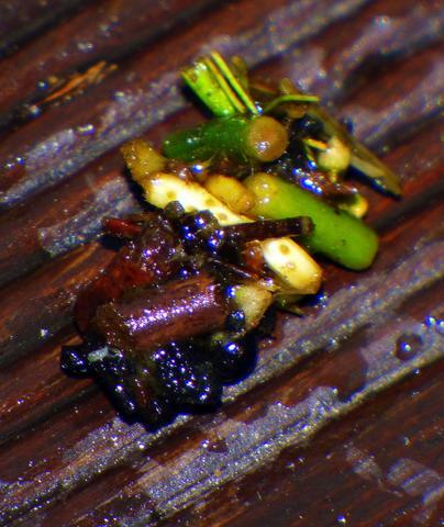 Seltsames pflanzen hnliches tier im teich was kann das for Steine im teich