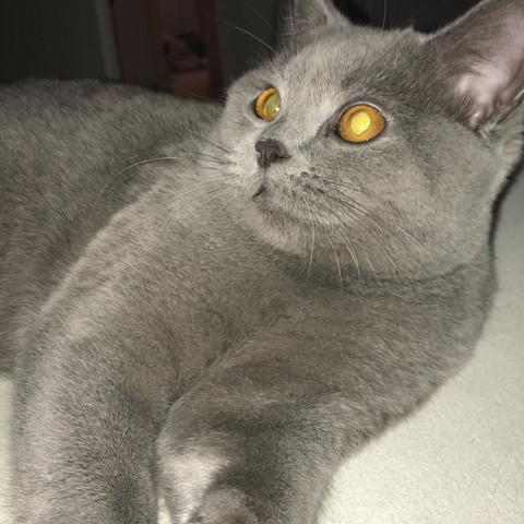Seniorenfutter schlimm für Kitten?
