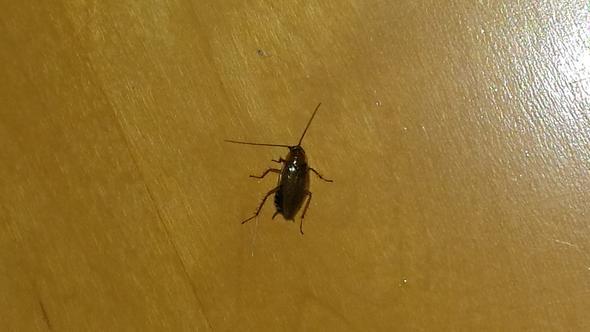 von oben - (Biologie, Insekten, Ungeziefer)