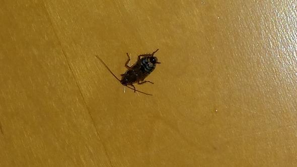 von unten - (Biologie, Insekten, Ungeziefer)