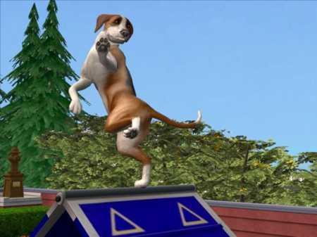 Sprung Trick - (Tricks, Sims 2, Tiergeschichten)