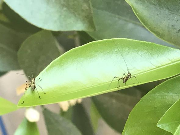 Bild 2 - (Insekten, Blattläuse, pflanzenschädlinge)