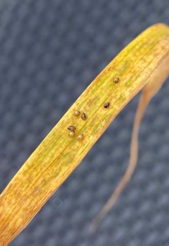 Sind das Zecken? Oder nur Blattläuse?