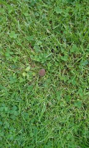 dunkler daneben - (Pilze, Magic Mushrooms, Zauberpilze)