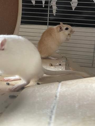 Sind die beiden Übergewichtig?