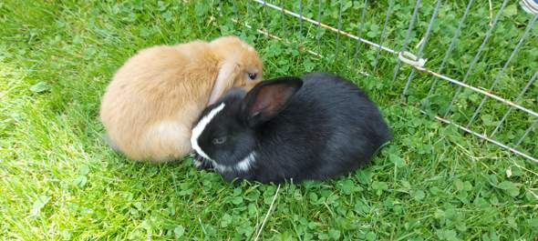 Are the bunnies sweet?
