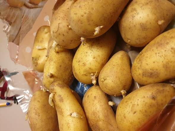 Kartoffeln Mit Keimen Essbar
