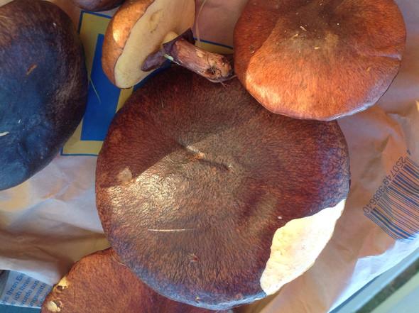 Essbar oder  - (Pilze, essbar)