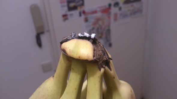 Bananen - (Schimmel, Banane)