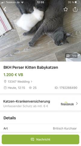 Sind diese kitten nicht etwas zu teuer?