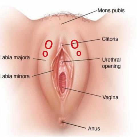 beulen an der innenseite der vagina