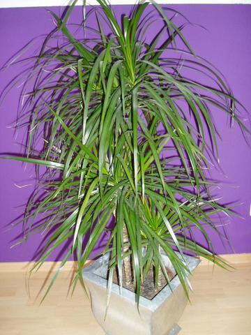 sind diese pflanzen giftig f r unsere katze katzen gift. Black Bedroom Furniture Sets. Home Design Ideas