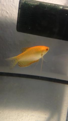 - (Krankheit, Fische, Aquarium)