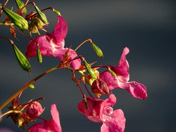- (Pflanzen, Natur, Insekten)