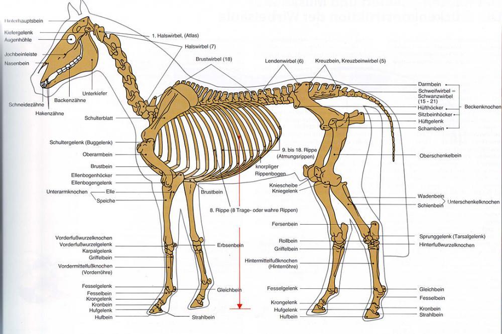 sind schafe mit pferden vergleichbar pferde