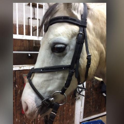 pony trense