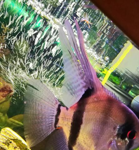 Aquarium Tiere AuГџer Fische