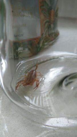 Enderal löwe skorpion und Partnerhoroskop: Löwe