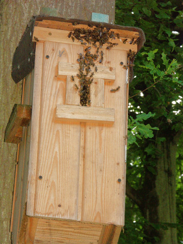 soeben eingetroffen bienenschwarm im hornissenkasten wie geht das weiter tiere garten natur. Black Bedroom Furniture Sets. Home Design Ideas