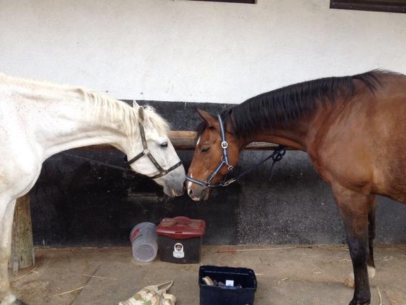 Pferdi - (Haare, Tiere, Pferde)