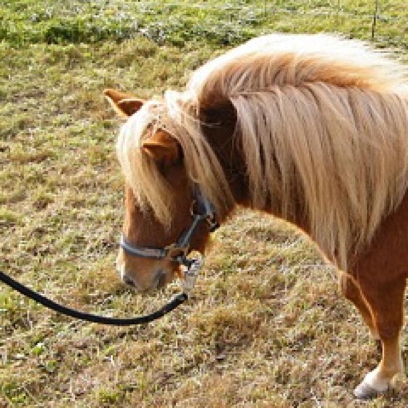 soll ich mir ein pony kaufen ohne es zu reiten und es nur dressieren und so pferderassen. Black Bedroom Furniture Sets. Home Design Ideas