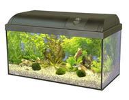 Waterhome Aquarium - (Aquarium, Austausch, Wechsel)