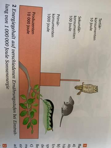 Sonneneinstrahlung Ökosystem?
