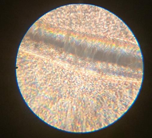 Sperma unter dem Mikroskop? (Gesundheit und Medizin, Sex