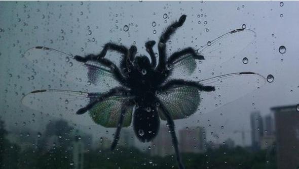 Bild - (Photoshop, Insekten, Spinne)
