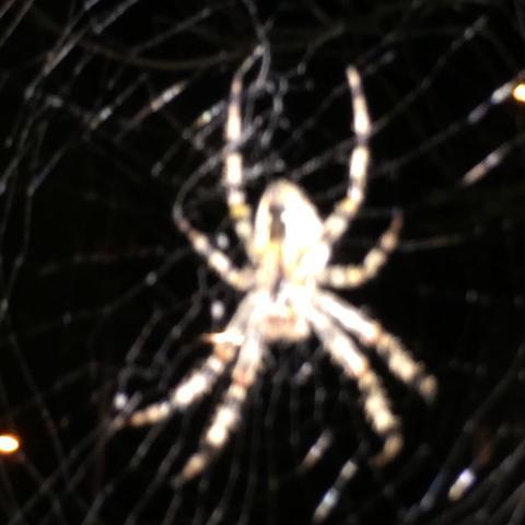 Spinnentiere - (Spinnen, Spinne, Spinnentiere)