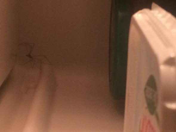 Frank's Lebensraum - (Biologie, Kühlschrank, Spinne)