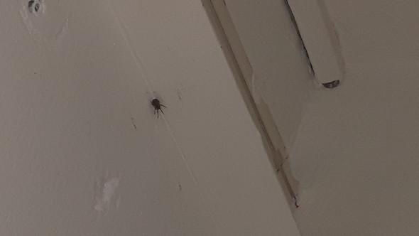 Spinnen Einsaugen