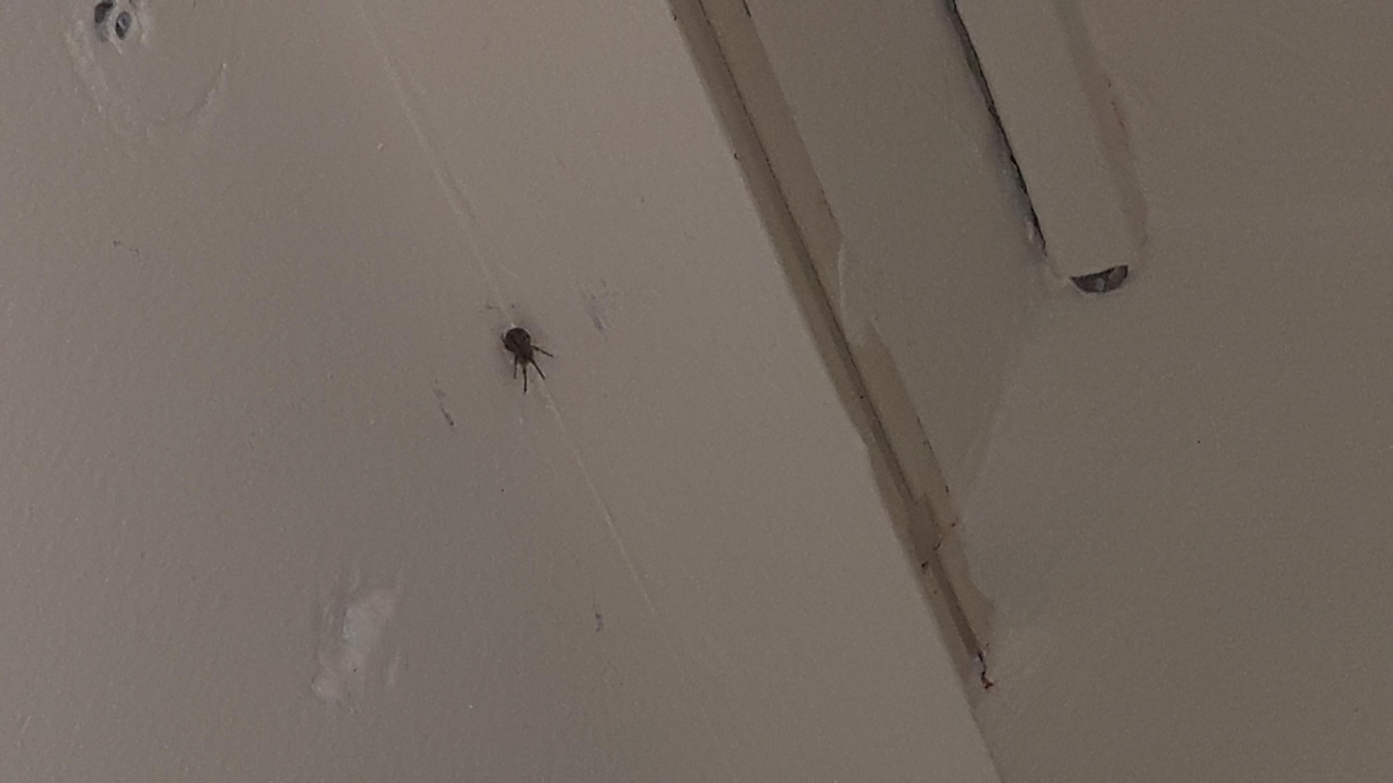 Spinne Lasst Sich Nicht Einsaugen Was Tun Sauger