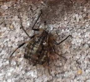 Spinnen Invasion Rund Ums Haus Terrasse Hauswand Etc Was Ist Das