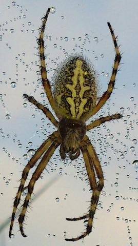 Spinne - (Freizeit, Spinnen, Spinne)